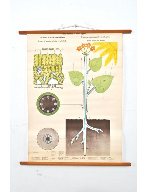 Schoolkaart wortel-stengel-bladeren